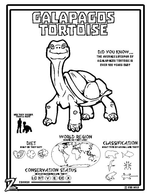 Zoo Wild Galapagos Tortoise Printable